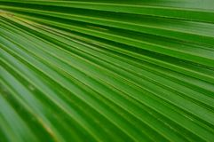 A close-up of the leaves of a palm tree. The close-up of the leaves of the palm tree is very beautiful Stock Photos