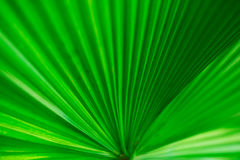 Close up Leaves texture closeup softly blur Royalty Free Stock Photo