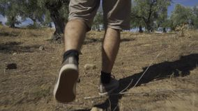 Man walking through the field. Close-up of the legs of a man walking through an olive grove stock video footage