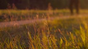 Close up of legs on path in the forest stock footage