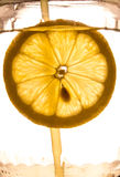 Close-up of lemon slice Stock Images