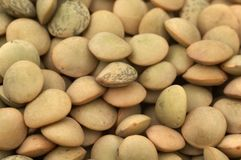 Close-up of lentil grain Royalty Free Stock Image