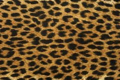Close up leopard spot pattern Stock Photo