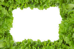 Close up of lettuce in frame shape Royalty Free Stock Photography