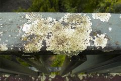 Close-up on lichen growing on wooden handrail. Lichen growing on wooden handrail royalty free stock photos