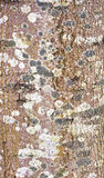 A close up of lichen or moss Royalty Free Stock Images