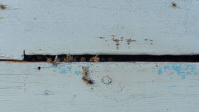 Close-up of a light blue beehive opening with bees stock video