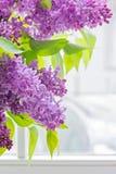 Close-up of lilac Royalty Free Stock Photos