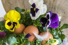 Close-up Easter eggs with a bird's feather and lilac, yellow, white pansies. Stock Photography