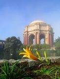 Close-up Of Lily At The Palace Of Fine Arts. Close-up of a lily at the Palace of Fine Arts, San Francisco on a foggy morning. Fog softens the background giving Royalty Free Stock Photo