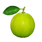 Close up of Lime. Lime isolated on white background Stock Photos