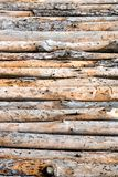 Close up of lined up pine tree trunks.  Royalty Free Stock Photos