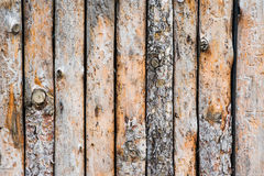 Close up of lined up pine tree trunks. Closeup of lined up pine tree trunks Stock Images