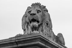 Close up lion statue at the Chain bridge. Budapest, Hungary. Black and white image royalty free stock images