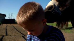 Close up little boy standing in pasture on background donkey. Portrait little boy afraid animals on livestock farm stock footage