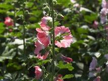 Close up little flower stock photos