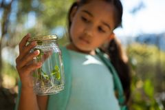 Little girl with backpack looking at jar with plant on a sunny day in the forest. Close-up of little girl with backpack looking into jar with plant on a sunny Royalty Free Stock Images