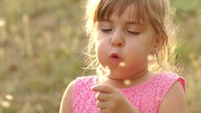 Little cute girl blowing a dandelion at sunset. Close-up of little girl blowing on dandelion in the summer in the Park at sunset, slow motion. Portrait of a stock footage
