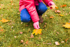 Close up of little girl collecting autumn leaves Stock Photography