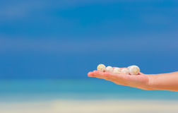 Close up of little girl hand holding beautiful sea Royalty Free Stock Photos