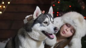 Close-up of a little girl petting a husky dog stock video footage