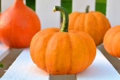 Close up of a little orange pumpkin Stock Photos