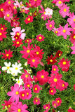 Close up little pink flower stock photo