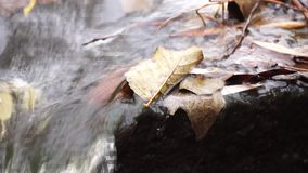 Close-up of a little stream and leaves in the water stock video footage