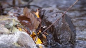 Close-up of a little stream with twittering of birds in the background stock video footage