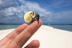 Close up live crab at white beach stock images