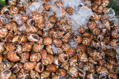 Close up of live snails Stock Photos