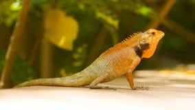 Close up of a lizard Stock Photo