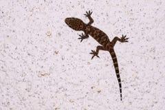 Lizard on wall royalty free stock photo