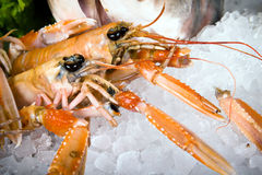 Close-up lobsters on ice Royalty Free Stock Image