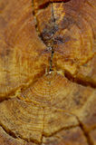 Close-up Log. A detailed closeup macro of a section of a log Royalty Free Stock Image