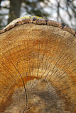 Close-up of a Log Royalty Free Stock Photography
