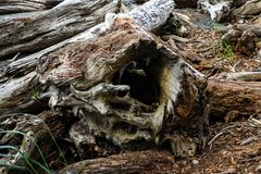 Close-up of a log on Californian beach, background. royalty free stock photo