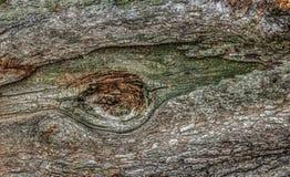 Close up of log Stock Image