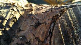 Close-up of a log stock image