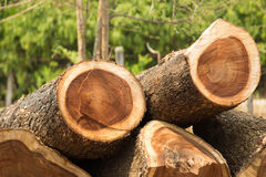 Close up of logs stacked at lumber mill.  Royalty Free Stock Image