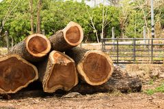 Close up of logs stacked at lumber mill.  Stock Photography