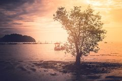 Lonely tree standing on ground surrounded whit sea in twilight tine. Close up lonely tree standing on ground surrounded whit sea in twilight tine Royalty Free Stock Photo