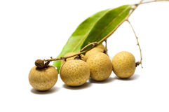 Close up longan Stock Images