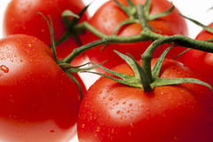 Close-up look at red ripe tomatoes on the vine with water drople Stock Photo