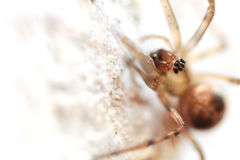 Close-up look at spider on the wall Stock Image