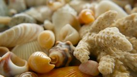 Different mixed colorful seashells as background. Various corals, marine mollusk and scallop shells. Close up lots of different mixed colorful seashells as stock footage