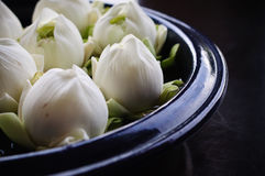 Close up of lotus decorate in vase. Close up of white lotus decorate in vase, Preparing for spa.Thailand style stock photography