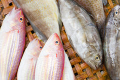 Close up of lovely fresh fish in a wet market Royalty Free Stock Photo