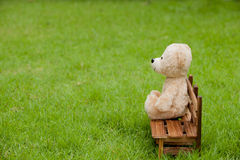 Close up lovely teddy bear sit on wooden chair, Concept about lo Royalty Free Stock Photos