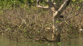 Dull mangrove twigs along Kangy River, Myanmar